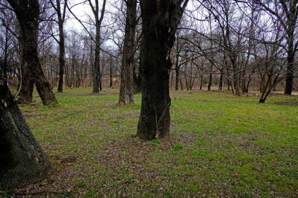 1. PDS - uklid pozemku na Palmovce (1)